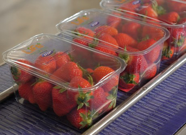 Fruit punnet solution extends shelf-life of cut fruit by up to 4 day